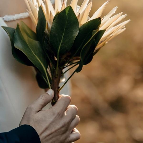Vestuvių koordinavimas